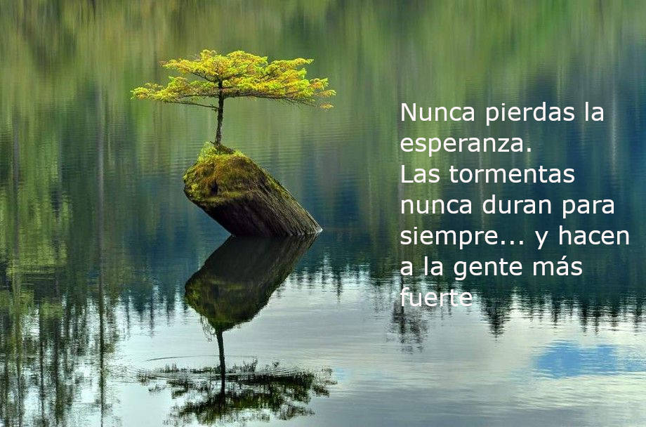 bonsai solitario en el agua con una frase