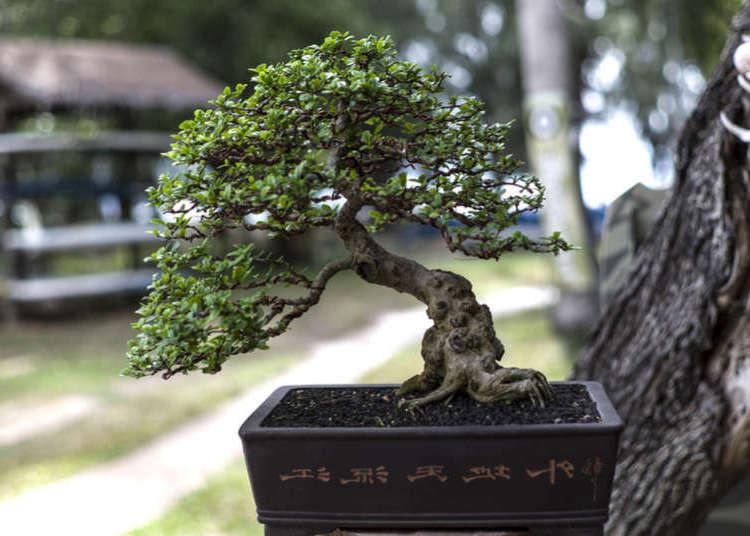 bonsai sobre un arbol