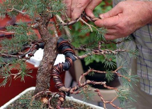 cableado de bonsai paso a paso