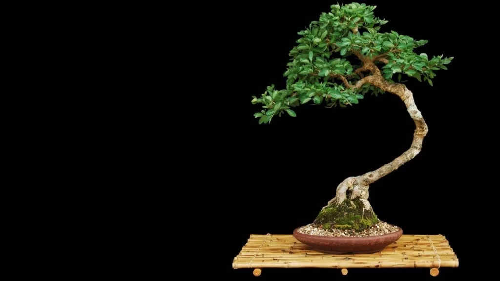 bonsai artificial