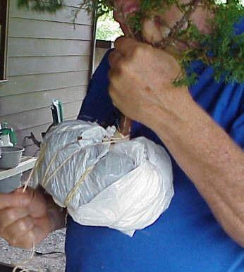 Bonsai tanuki sujeto con cuerdas y bolsa
